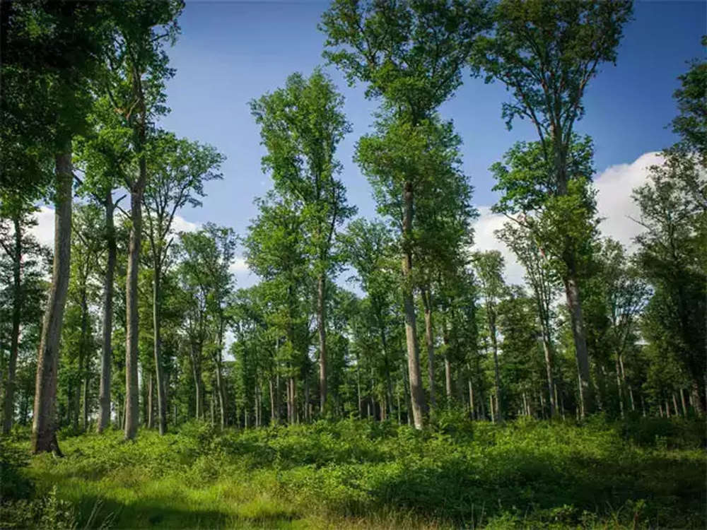 Work begins on granting forest rights to 13 lakh tribals