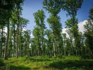 Forrest-land-agencies