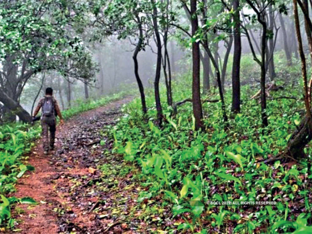In financial year 2018-19, West Bengal created tree cover of more than 5,000 hectares