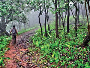 forest-BCCL