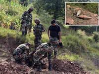 16 animals die as Pakistan violates ceasefire along LoC in J-K's Rajouri, Poonch