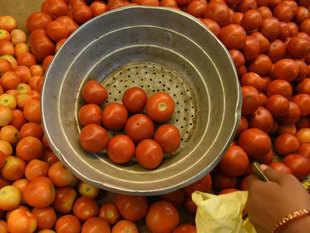Tomato---BCCL