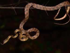 Snake_Twitter