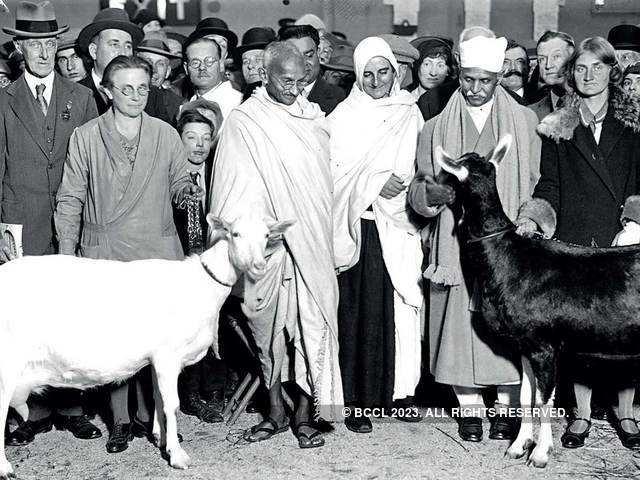 Image result for Image for Gandhi and goats milk