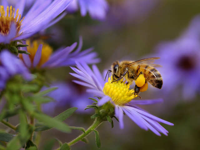 For our sake, we need to let them 'bee'