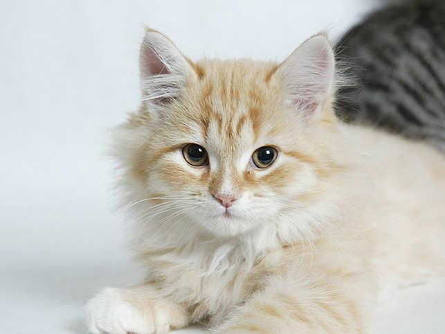 Cat1_getty