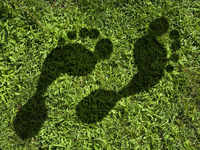 Tips to mitigate your carbon footprint: Go vegan, take direct flights, use smart geysers