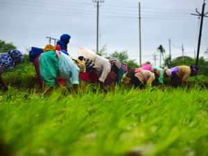 agriculture-bccl