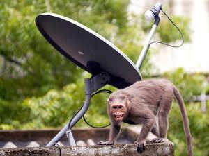 Dish-TV bccl