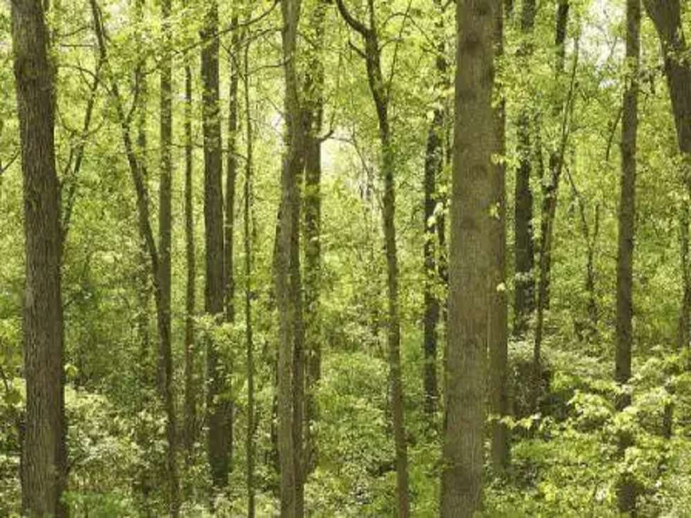 West Bengal govt to create forests using Japanese method