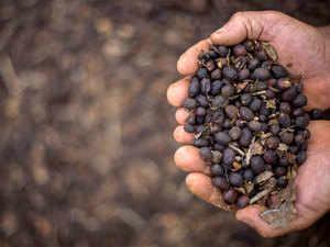 Coffee---AFP