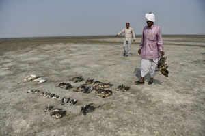 sambhar birds