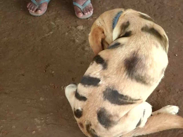 Image result for dog painted as tiger in karnataka