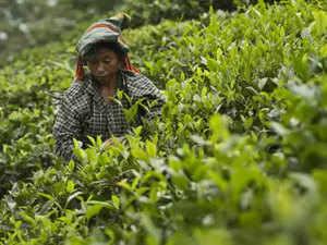 Tea---Agencies