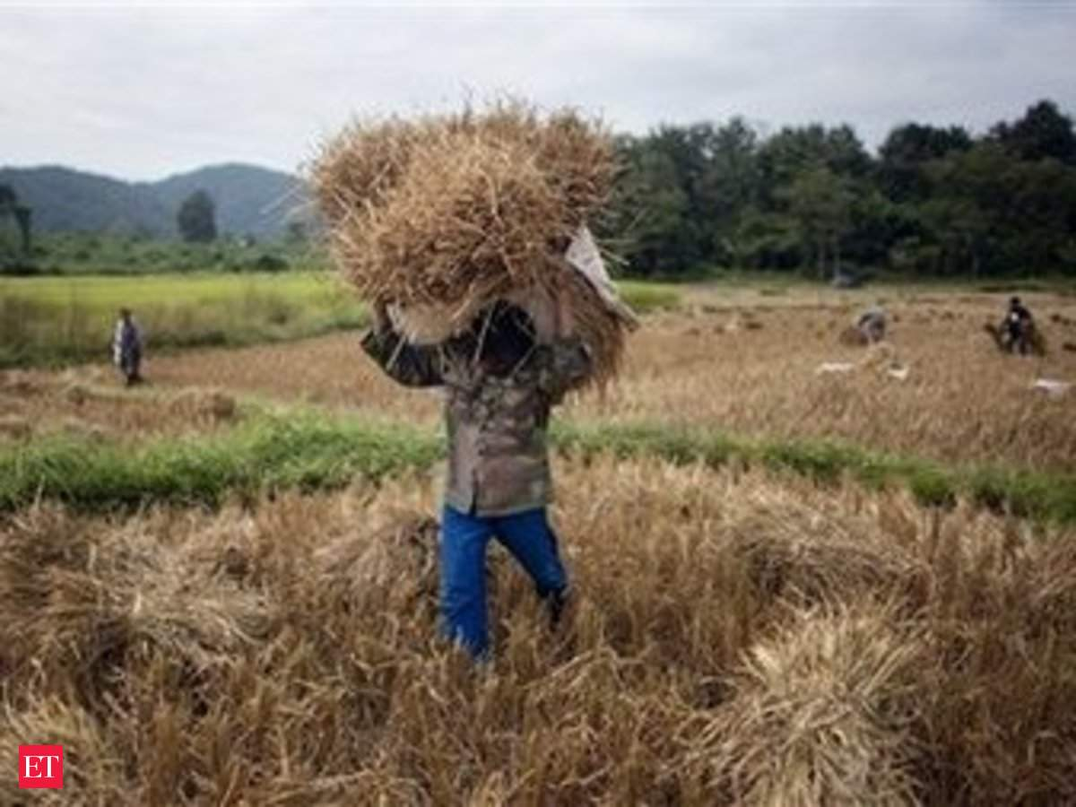 Indian farmers look to reap rich gains in Madagascar - The