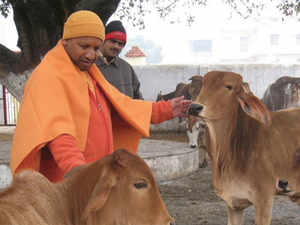 Uttar Pradesh: Landmark Ayodhya verdict, violent protests cap eventful year