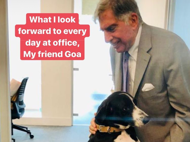 Recently, Tata shared a picture of him with his friend 'Goa' at work.