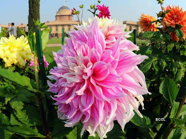 British Garden Art Delhi Mughal Garden To Open Doors Soon As