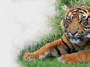 sunda-tiger