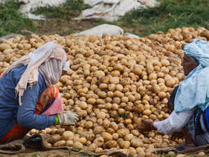 potato pti