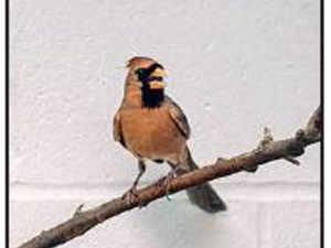 Bird NYT