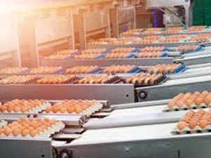 Food processing Agencies