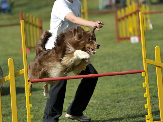 dog-olympics_iStock