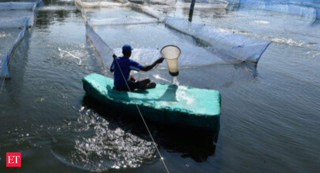 Japan lifts inspection order for black tiger shrimps from India