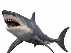 Shark---Getty
