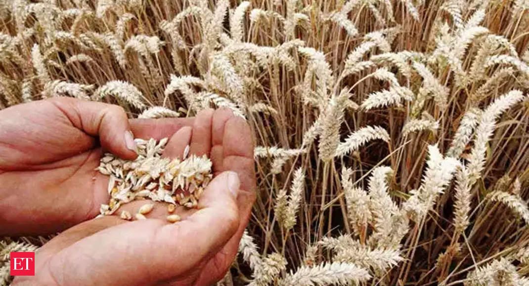 Wheat: India to export wheat to Afghanistan and Lebanon