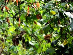Plant---BCCL