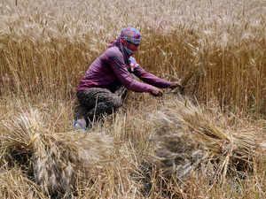 rabi-crops-ani