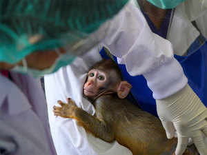 Prototype vaccine protects monkeys from coronavirus