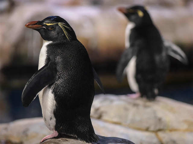 Now, penguin poop is no laughing matter