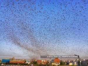 locust agencies