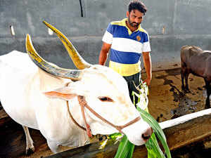 milk-farmer-bccl