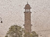 Locust attack ahead of the sowing season: at the receiving end are farmers and the economy