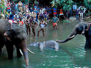 Kerala elephant death: One arrested, efforts on to nab more accused