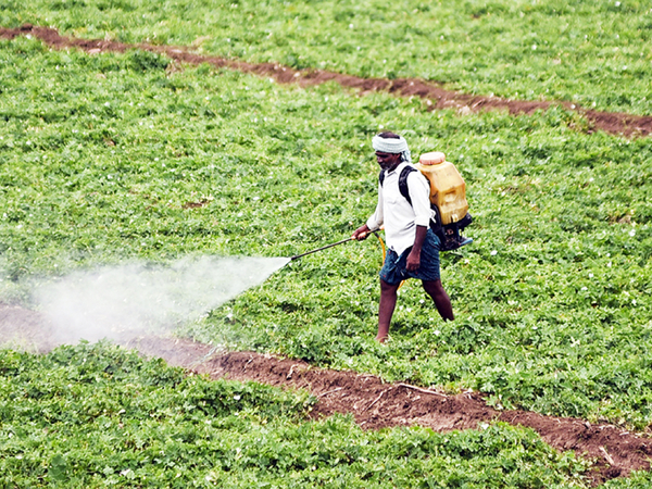 The cost of a unilateral ban: The pesticides industry stares at an INR9,600 crore hole in business