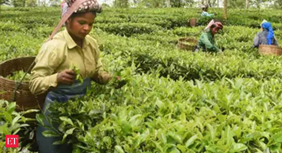 India exporting tea to China and Iran despite covid, border standoff