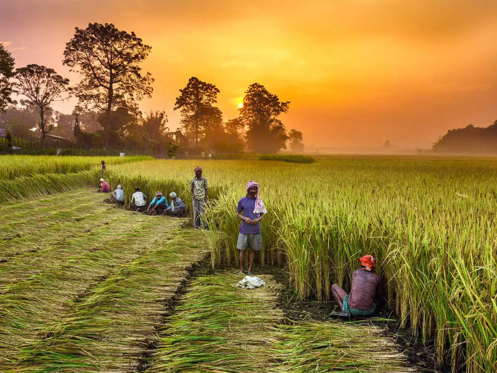 Agriculture to rack up gains as pandemic roils the economy