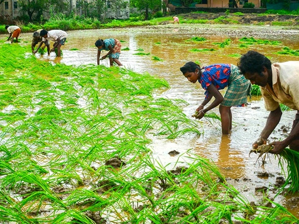 Free trade and competition in agriculture: India's economic reforms, part II