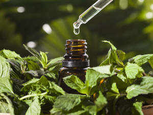 mentha oil rate
