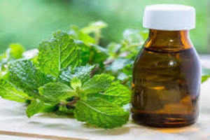 mentha oil latest-1