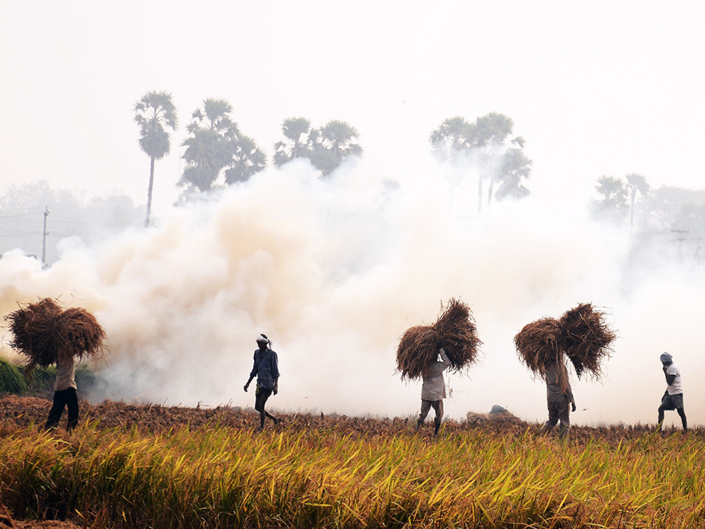 'Don't burn stubble. Sell it': Green firms have a sweet deal for farmers, and a fix for Delhi's air