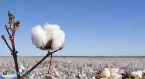 cotton-et