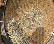 Nivar causes a gold rush in AP's Uppada