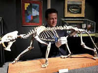 40-million-year-old skeleton of sabre-toothed tiger goes under the hammer, expected to fetch $88K