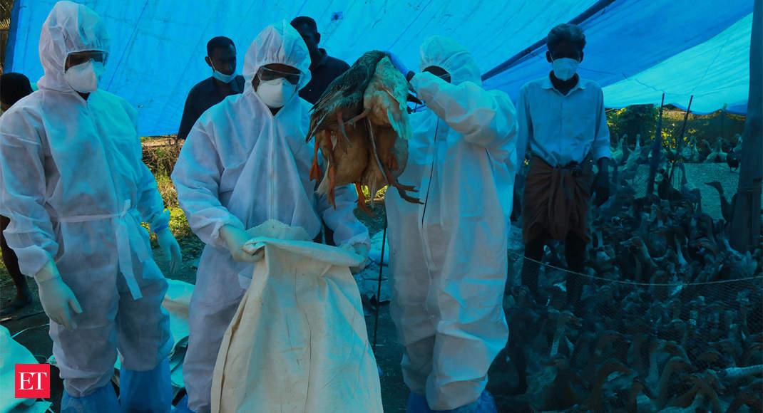 High alert in Uttarakhand for bird flu