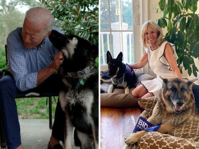 Biden's pooches sent home after biting episode